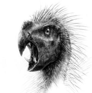 鋭い犬歯を持つ草食恐竜:時事ドットコム