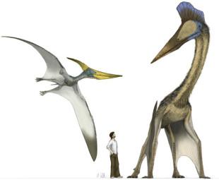 翼竜は「4本脚」で助走?:時事...