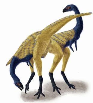 鳥と同じ「指」持つ恐竜:時事ド...