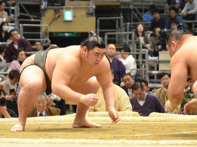 相撲 おお の しょう