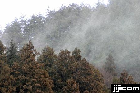 スギ花粉の猛威 写真特集