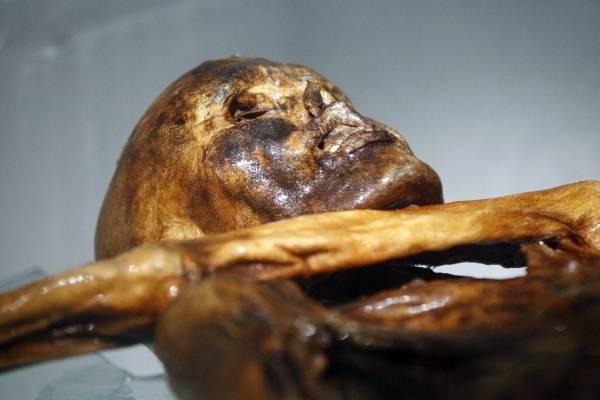 約5300年前のミイラ「アイスマン」 写真特集