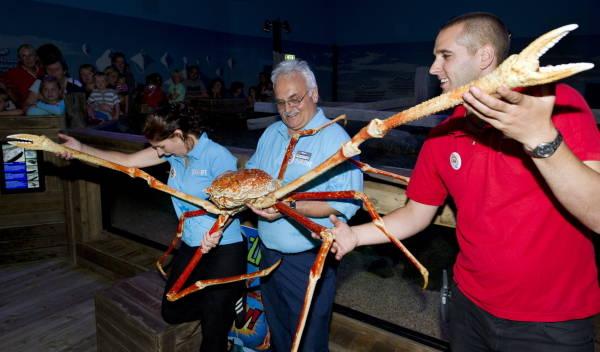 巨大魚だらけの水族館3号館 ジャイアント甲殻類 写真特集