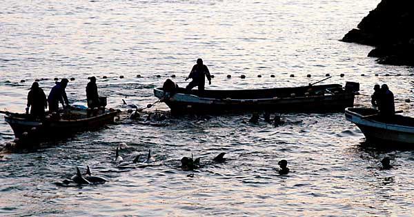 イルカ漁 写真特集