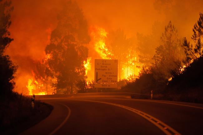 ポルトガル森林火災 写真特集:...